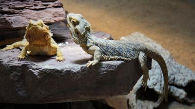 Increased Interest in Pet Reptiles Is Boosting Product Sales, According to Report