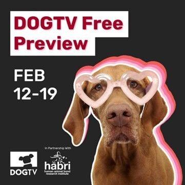 DogTV free Feb preview