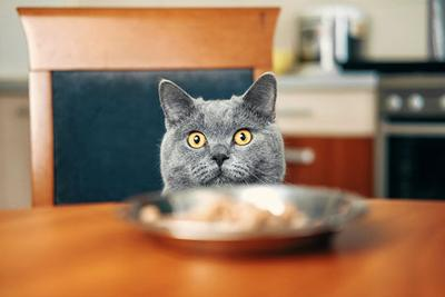 Pet Owners Turn to Natural Cat Food for their Finicky Felines