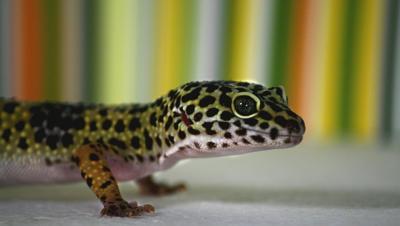 reptileawareness.jpg