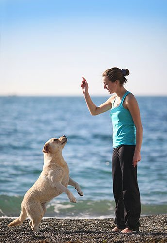 Pet Training Products for Today's Fido-Friendly Culture