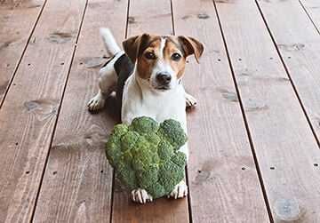 Novel Proteins and Superfoods Are Giving Dog Foods a Boost