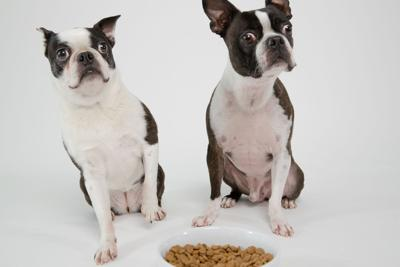 Why You're Thinking About Pet Food Quality Wrong