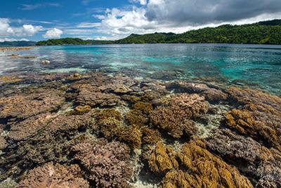 International Waters: Confusion and Frustration Still Reign Regarding Indonesian Corals