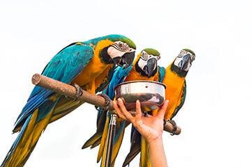 Bird Food Makers Focus on Nutrition