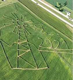 corn maze windmill.jpg