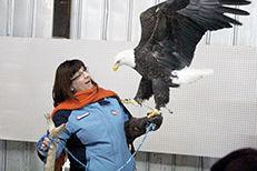 Eagles few for Eagle Days