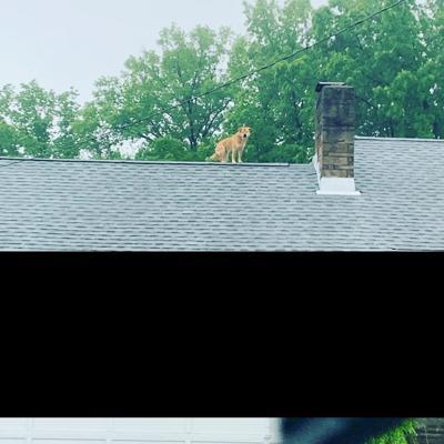 Dog gone strange behavior by beloved North Olmsted pet