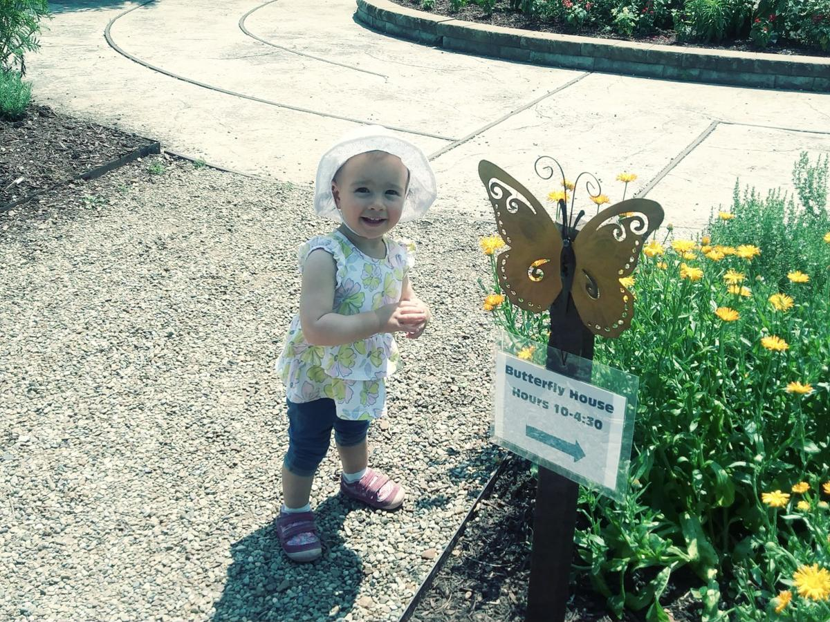 Beautiful winged wonders attract visitors to Butterfly House at Miller Nature Preserve