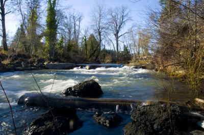 Public can aid in creek restoration