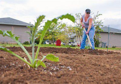 Community gardens get growing
