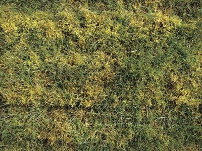 Control moss by keeping grass healthy