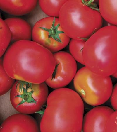 Tomato lovers: nix disease, grow the best