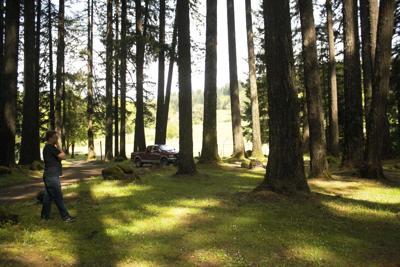 A1 FC treehouses.jpg