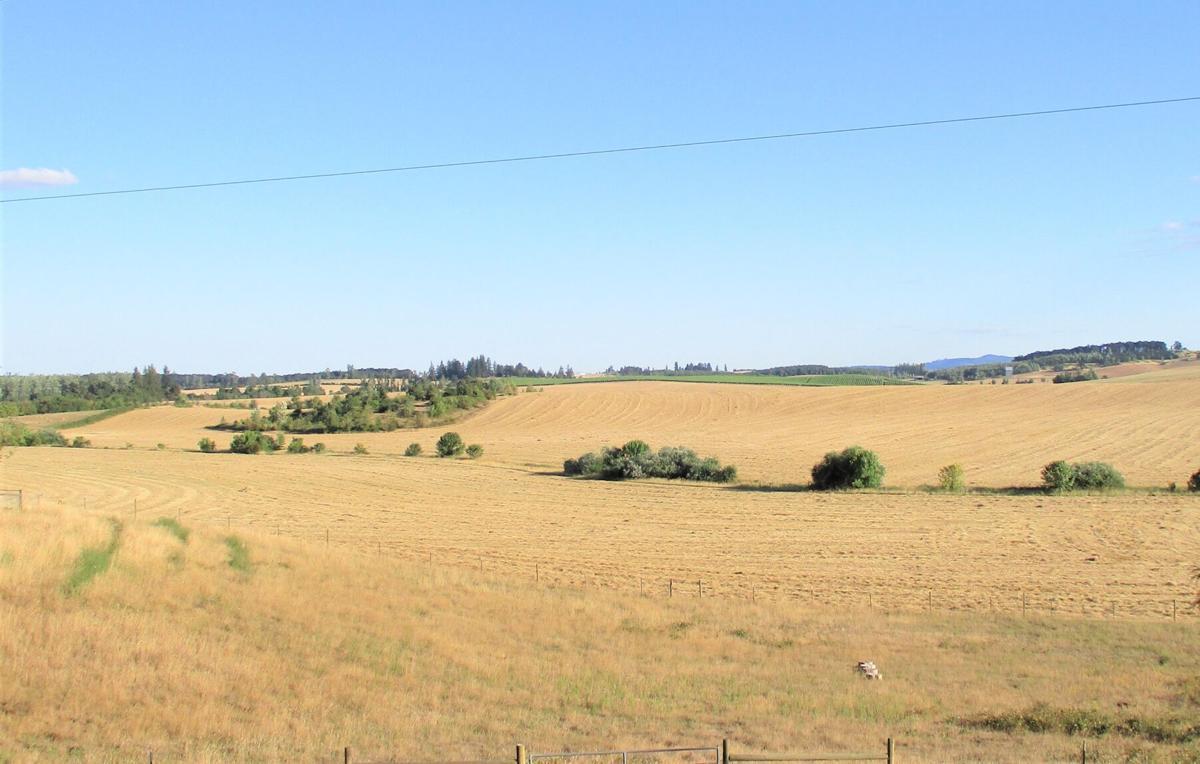 A7 grass field.jpg