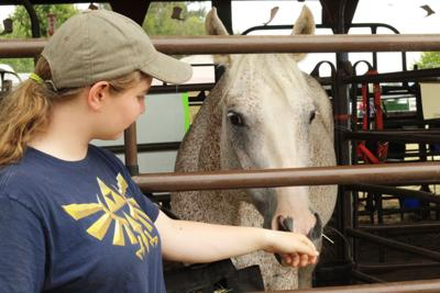 Fair a learning experience for horse competitor