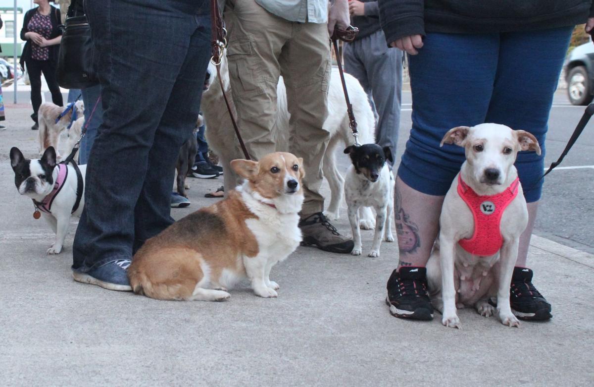 A1 Puppies.jpg