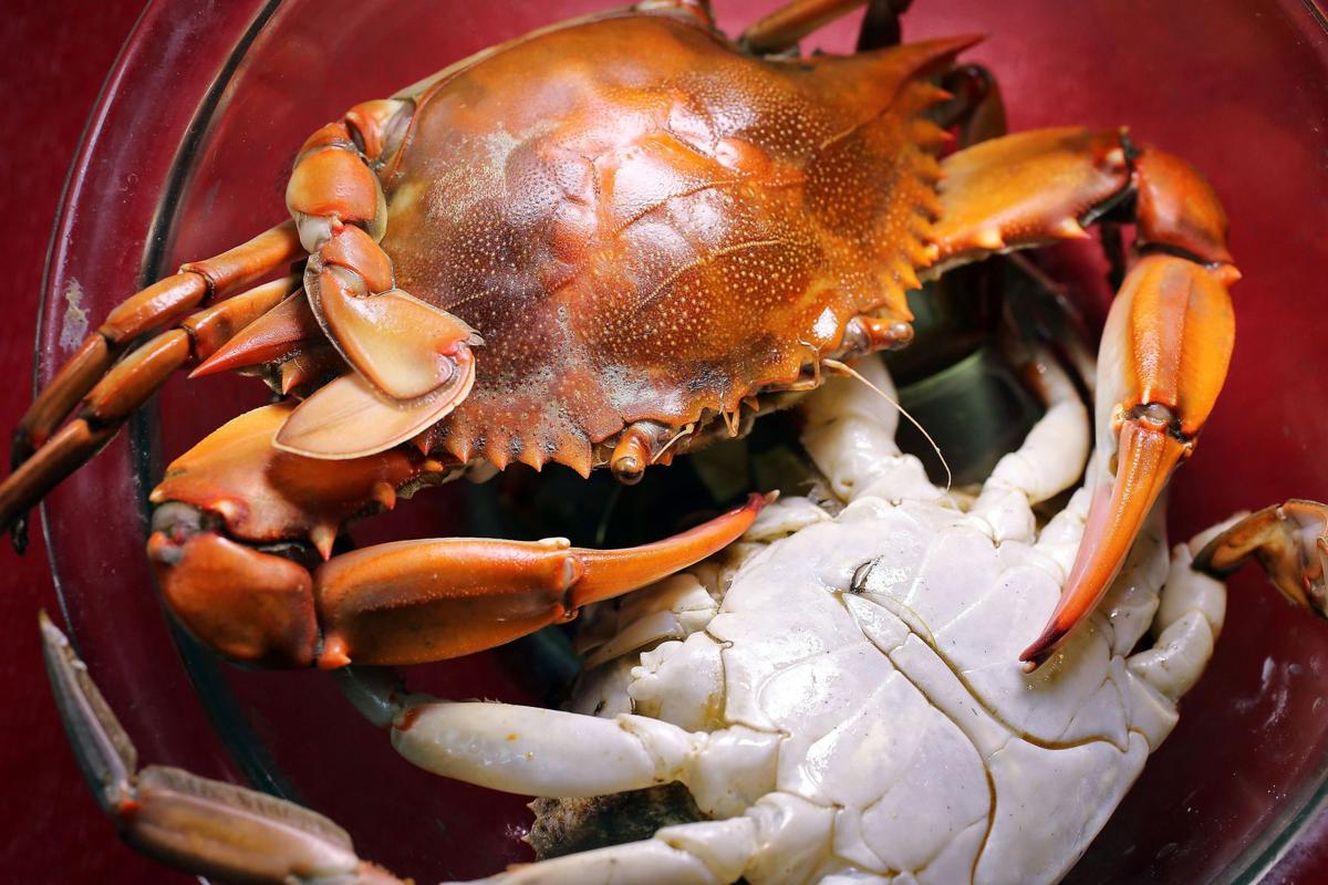 Blue crabs are 'beautiful swimmers' and voracious eatersTomatoes make a new shell for crab meat