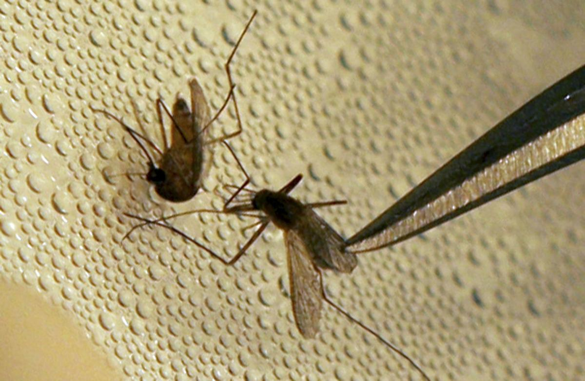 Berkeley to spray for mosquitoes by plane