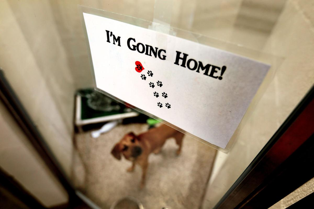 adopted going home shelter.jpg (copy)