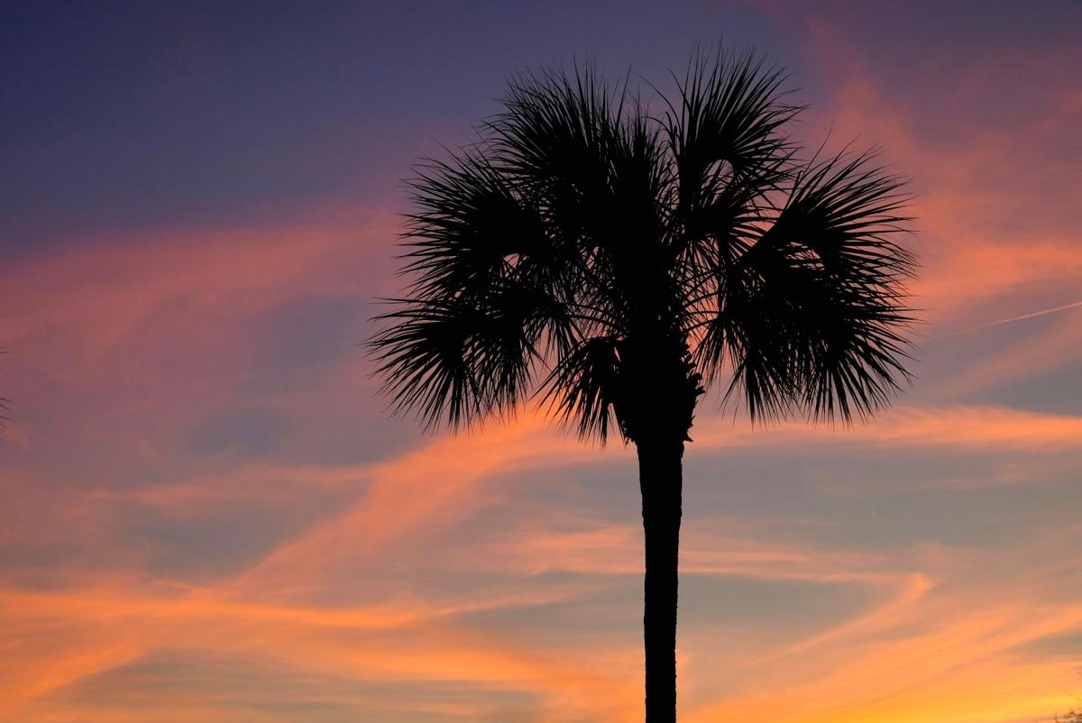 Palmetto tree sunset (copy) (copy)