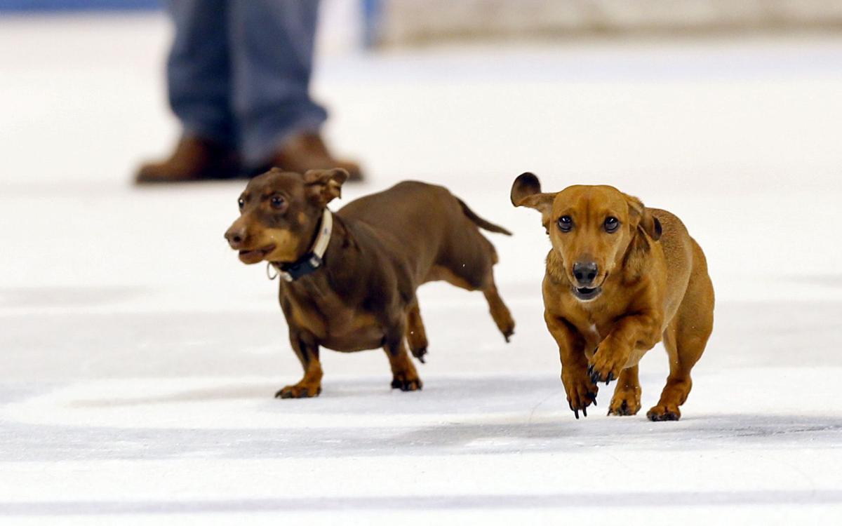 Dog Days Of Winter At Stingrays Sports Postandcouriercom