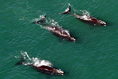 Scientists return to study whales