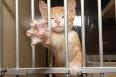 kitten colds
