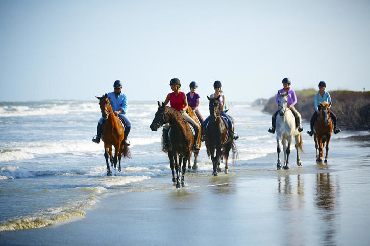 Seabrook Horses