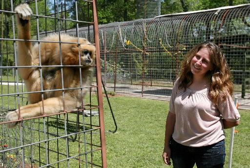 Protecting primates amid war