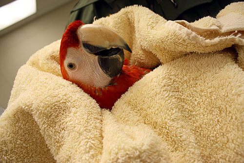 Exotic birds rescued