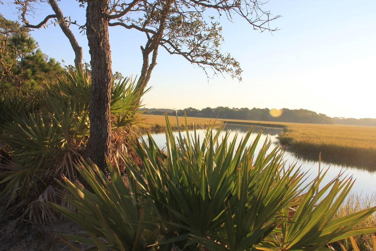 Buffers protect tidal creeks