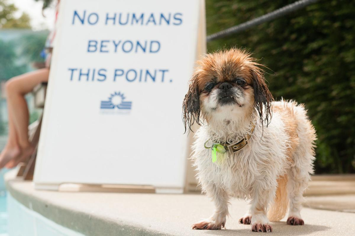 Dog Day Afternoon wet dog with sign