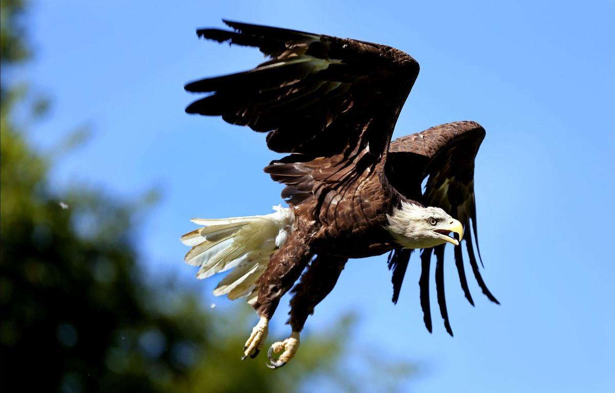 Language in bill threatens wild birds