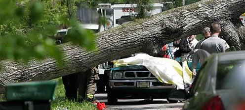 Falling Tree Kills Couple