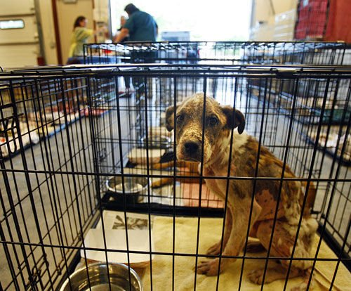 Seized pets to get new homes