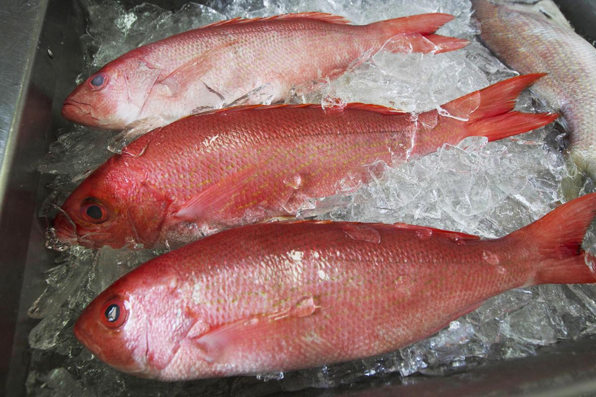 Local red snapper might be back on the south carolina for Red snapper fishing