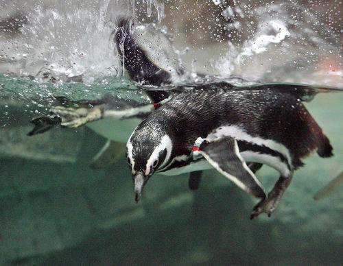 S.C. Aquarium back in swim