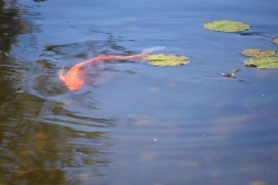 Backyard ponds bring resort feel home