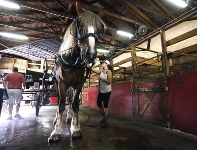 washing horse in barn.jpg (copy)