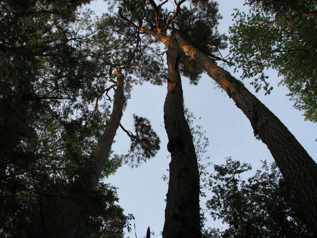 South Carolina National Parks (copy) (copy)
