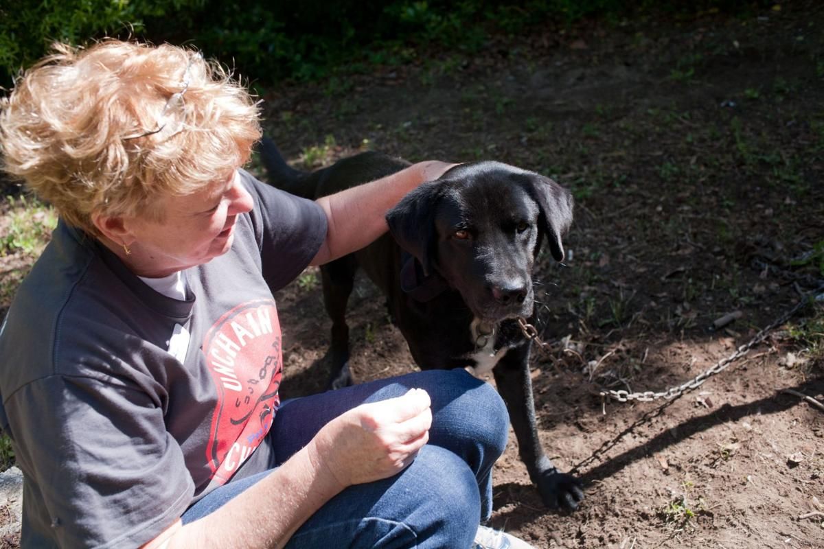 Project seeks to give pets freedom from tethers