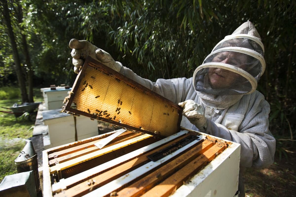 LP Bees 101718_01.JPG