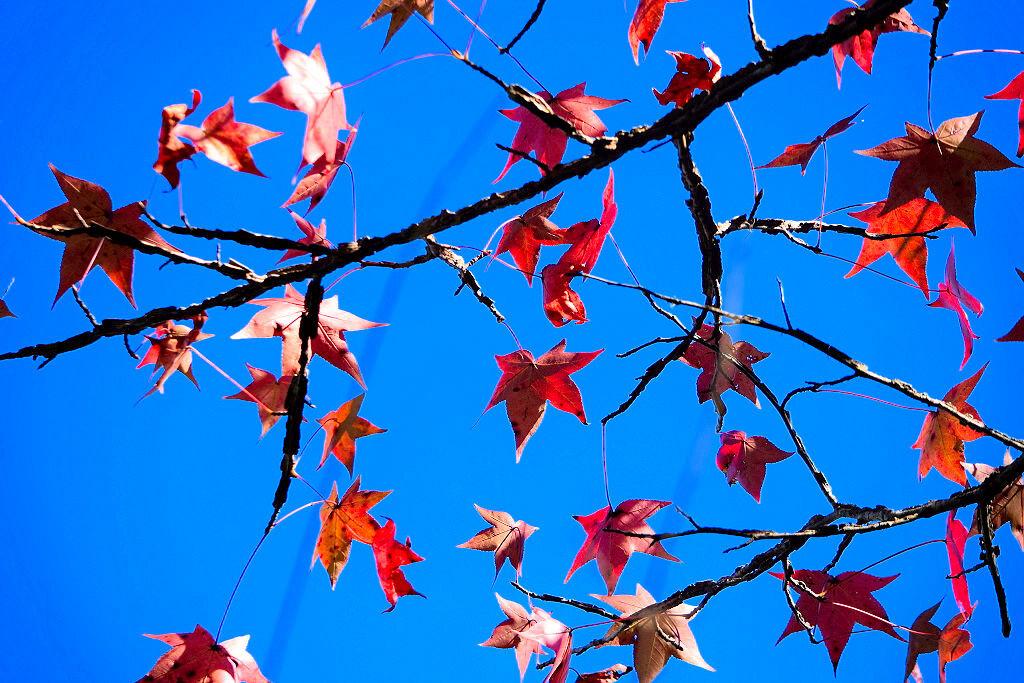 leaves almers.jpg