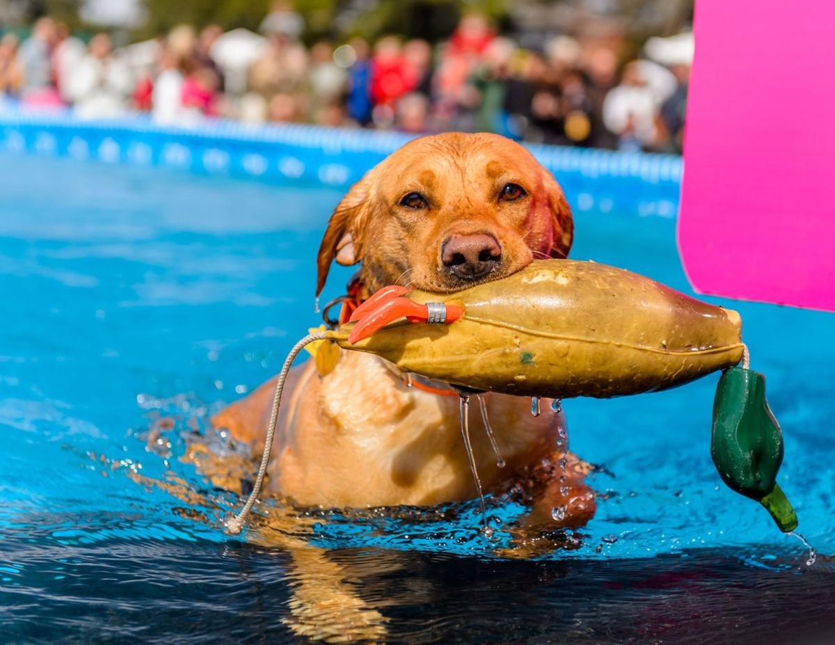 DockDogs Area Labs to compete in popular offering