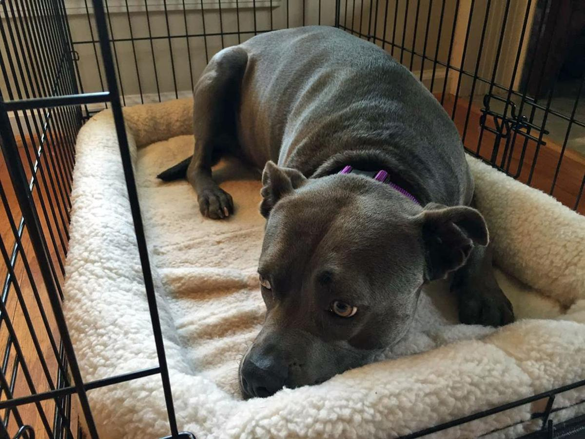 New collars monitor pets for pain, problems