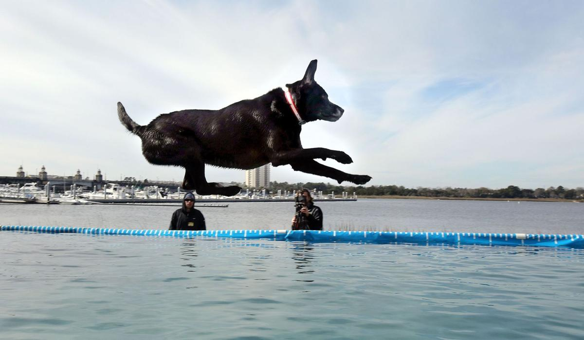 Pups take dive at DockDogs despite chilly temps