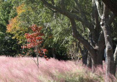 Reader photos: Fall in the Lowcountry (copy)