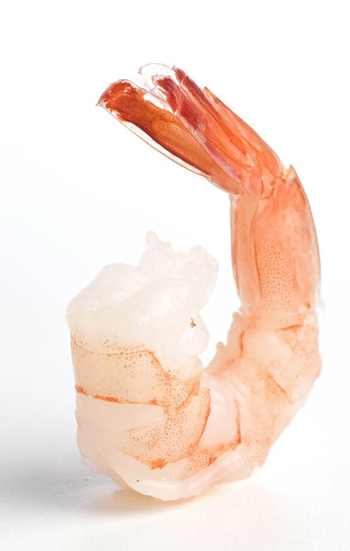 Shrimp unlikely in local waters until late June