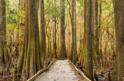 7 Wonders of South Carolina — Congaree National Park (copy)
